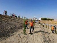300 ağaç toprakla buluştu
