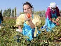 Çiftçi ve üreticileri sevindirecek müjde