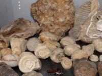 Kolye yapmak için dağ-tepe dolaşırken 550 milyon yıllık fosiller buldu