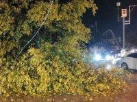 Ağaç yola devrildi, sürücü son anda kurtuldu