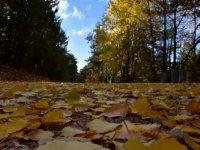 Kızılcahamam'ın göz kamaştıran sonbahar güzelliği