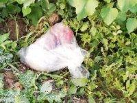 Altınözü'de, tarlada gömülü 3,5 kilo uyuşturucu ele geçirildi