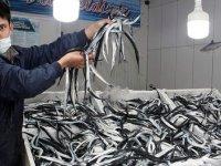 Sinop'ta zargana avında bolluk yaşanıyor