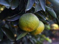 Yaş meyve ve sebze ihracatı kasımda 371,5 milyon dolara ulaştı