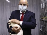 Ankara'da bodrumda bulunan 68 köpek, tedaviye alındı