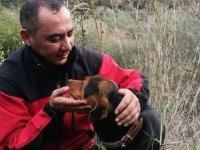 Kuyuya düşen köpek, itfaiye ekiplerince kurtarıldı