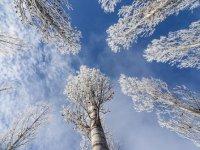 Doğu'da buzlanma ve don olayı bekleniyor