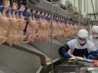 Türk firma tavuk ayağıyla girdiği Çin pazarında hedef yükseltti