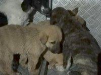 Barınakta yavru köpeklerin kuyruklarının kesilmesine soruşturma