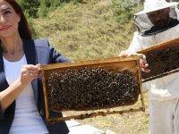 'Arıların Covid- 19'u tespiti konusunda bir test ve araştırma yapılması gerekiyor'