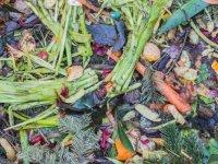 İsraf edilen gıdanın yüzde 25'i ile 870 milyon aç insan doyurmak mümkün