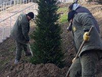 Ağaçlandırma seferberliği devam ediyor