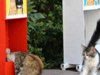 Kedi ve köpekler için mama istasyonları kuruldu