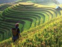 1 milyon 782 bin kadın çiftçi Türkiye'yi doyuruyor