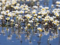 """Kızılırmak Deltası'nın """"zehirli güzellik""""leri"""