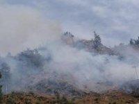 Osmaniye'deki orman yangınında 5 hektarlık alan zarar gördü