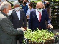 Çiftçilere ücretsiz sebze fidesidağıtımına başlandı