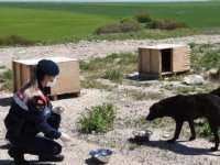 Eskişehir'de jandarma, sokak hayvanlarını 5 ton mamayla besledi