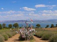 Görsel şölen sunan 'mor bahçeler' bayram tatilinde binlerce kişiyi ağırladı