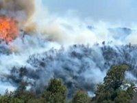 Aydın'da çıkan orman yangını, Muğla'ya sıçradı