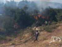 Balıkesir'de orman yangını; 20 dönüm alan kül oldu