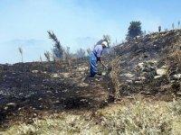 Buldan'da 2 hektar ormanlık alan yandı