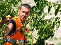 Ankara'ya nefes çocuklara meyve