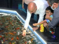 Koi balıkları Deniz Dünyası'nda