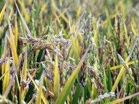 'Suya göre tarım' başladı hem tasarruf hem verimlilik arttı