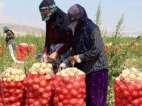 Tarım Sektörünün Görünmez Kahramanları