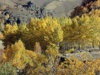 Ağrı'nın Güneykaya Dağları'ndaki vadiler sonbahar renklerine büründü