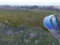 Kızılırmak Deltası'nda yanan alanlar 1 yılda doğal yapısına kavuştu