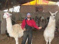 Çubuk'taki Peştanlı Çiftliği'nden örnek davranış