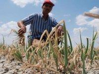 Aşırı yağışlar 580 bin dönüm tarım arazisine zarar verdi