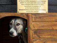 İşkence gören köpek engellilerin 'Dost'u oldu
