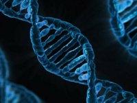 Tüketilen gıdanın DNA'ya 'net' etkileri tespit edildi