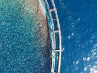 Ortadoğu'nun balığı Doğu Akdeniz'den