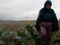 Yerli tohumdan ürettiği ürünleri pazarda satıyor