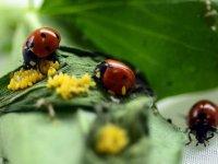 Böcekler EXPO 2023'e 'uğur' getirecek