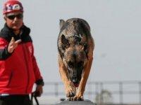 Hayat kurtaran köpekleri yetiştiriyor