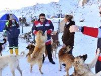 Ücra bölgelerdeki köpeklere gıda desteği