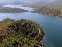 İklim değişikliğine karşı ağaçlandırma