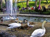 Ankara parkları bahara hazır! Ankara'daki hangi parkta mangal yakılabiliyor? Ankara'daki parkların ulaşım bilgileri