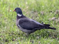 Doğu'nun Çukurova'sı kuşlarla cıvıl cıvıl