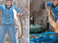 Gece ağ attı, sabah iki dev balık tuttu