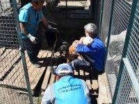 Gölbaşı Hayvan Barınağı yenileniyor