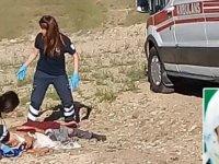 Köpekler tarafından saldırılan yaşlı kadın hayatını kaybetti