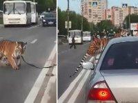 Rusya'da akılalmaz olay: Otomobildeki kaplan aniden yola atladı