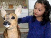 Amasyalı ailenin sevimli misafiri, karaca 'Boncuk'
