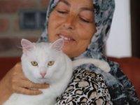 Felçli kedi, Hülya öğretmen sayesinde hayata tutundu